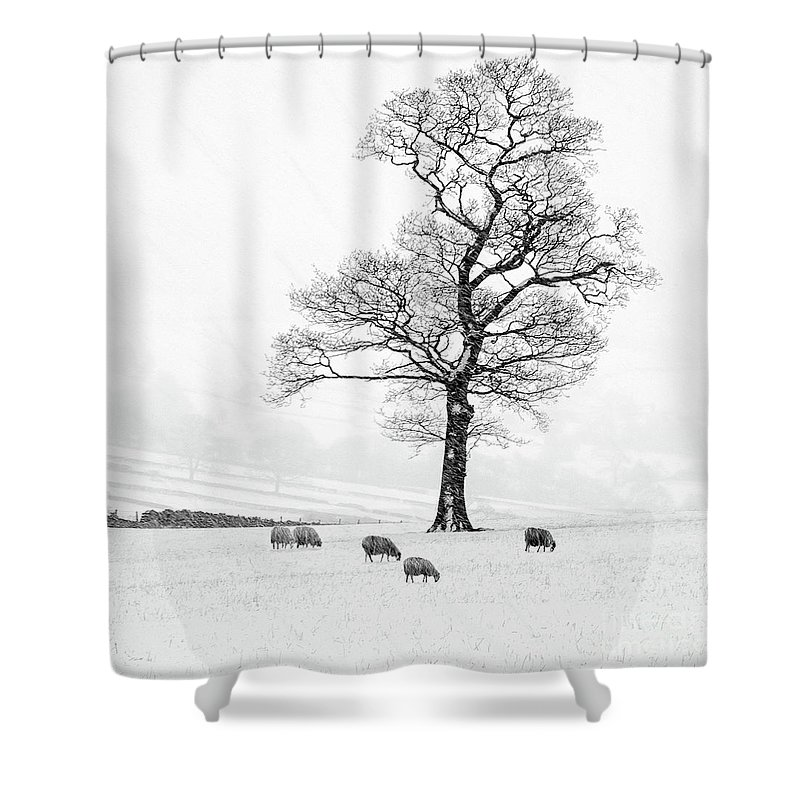 Sheep In Winter Shower Curtain featuring the photograph Farndale Winter by Janet Burdon