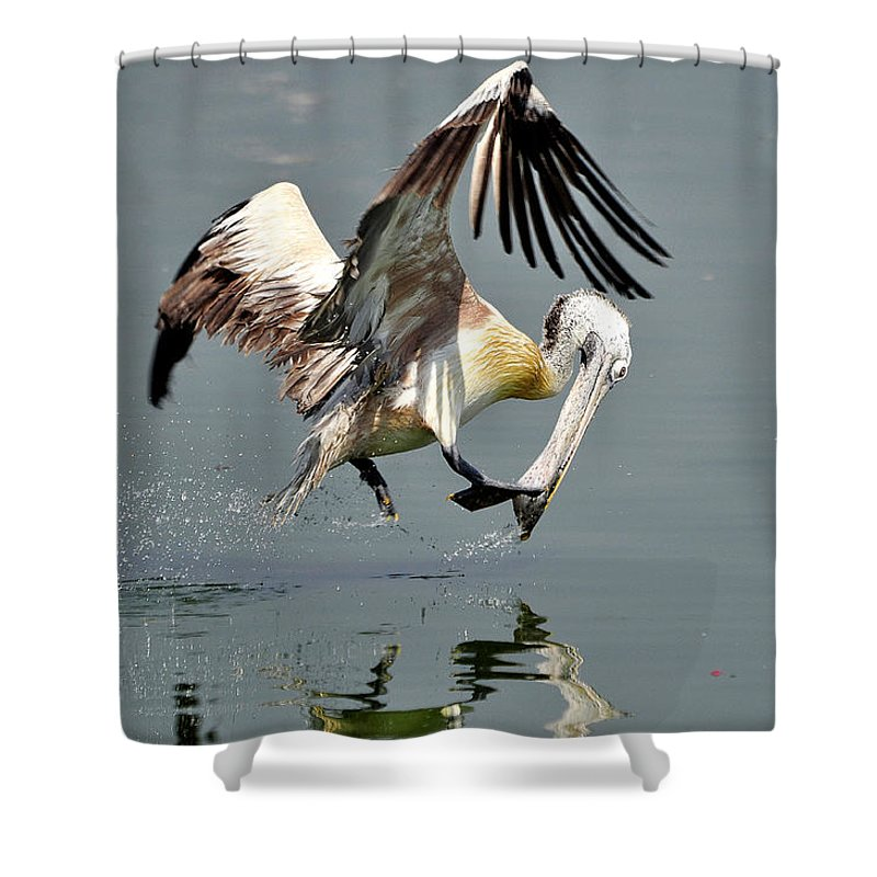 Pelican Shower Curtain featuring the photograph Fast And Focused  by Joseph Franco