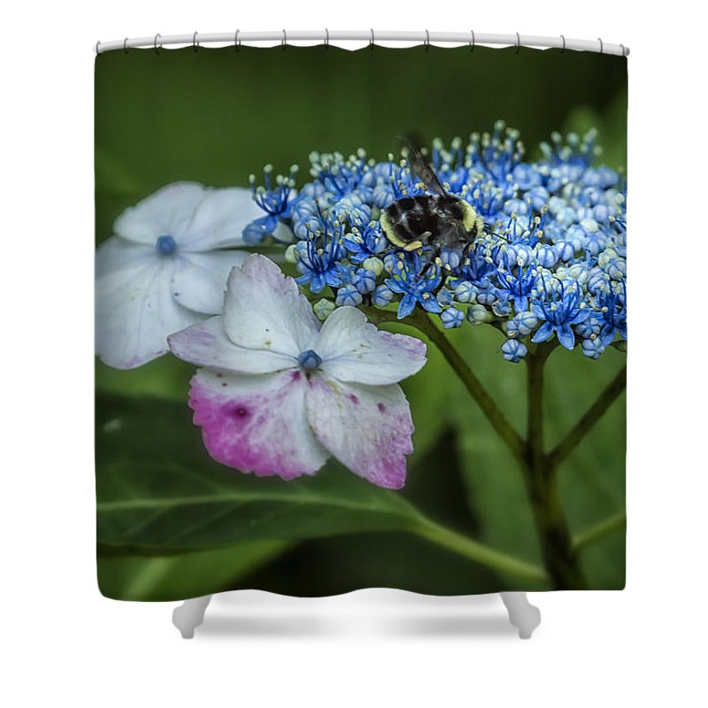 Bumblebee Shower Curtain featuring the photograph Fast Food For Bumblebees by Belinda Greb