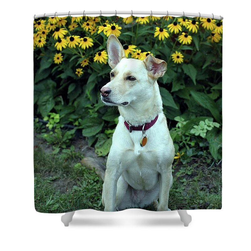 Dog Shower Curtain featuring the photograph Fawn Posing by Kathleen Struckle