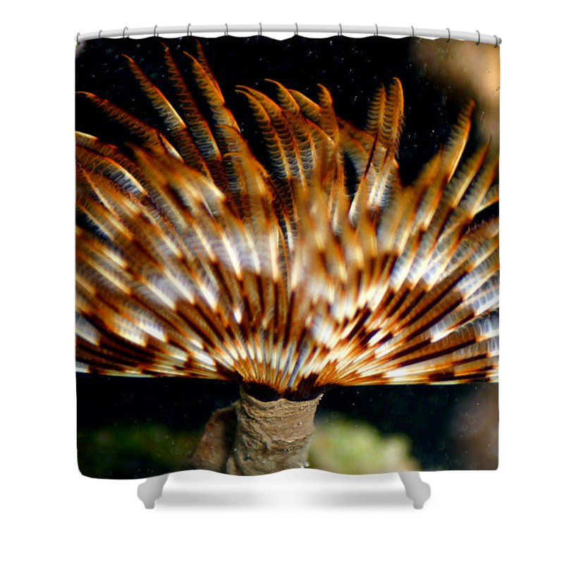 Feather Duster Shower Curtain featuring the photograph Feather Duster by Anthony Jones