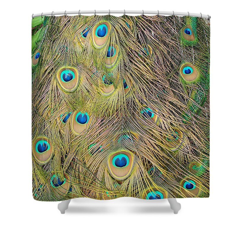 Peacock Shower Curtain featuring the photograph Feather Finesse by Margaret Bobb