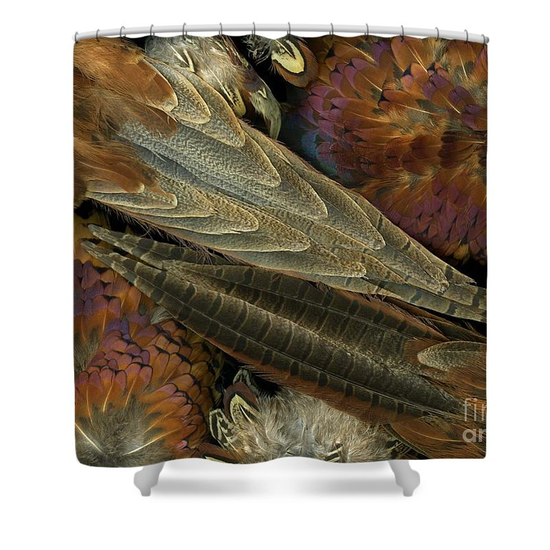 Pheasant Shower Curtain featuring the photograph Featherdance by Christian Slanec