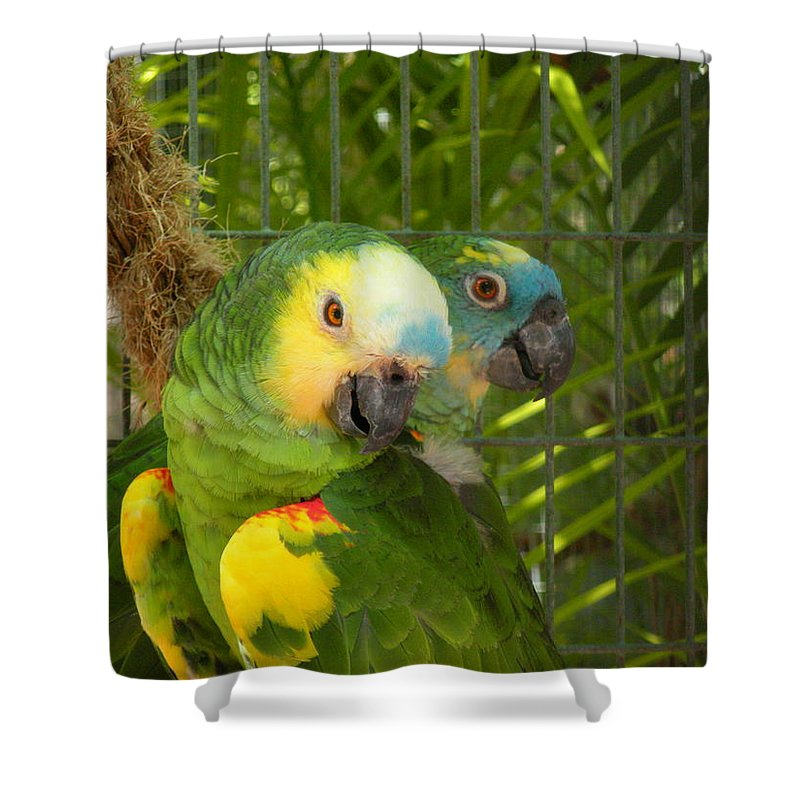 Birds Shower Curtain featuring the photograph Feathered Friends by Maria Bonnier-Perez