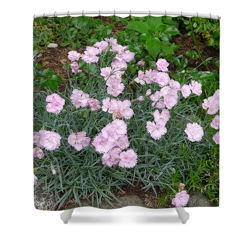 Flower Shower Curtain featuring the photograph Feathered Pink by Valerie Ornstein