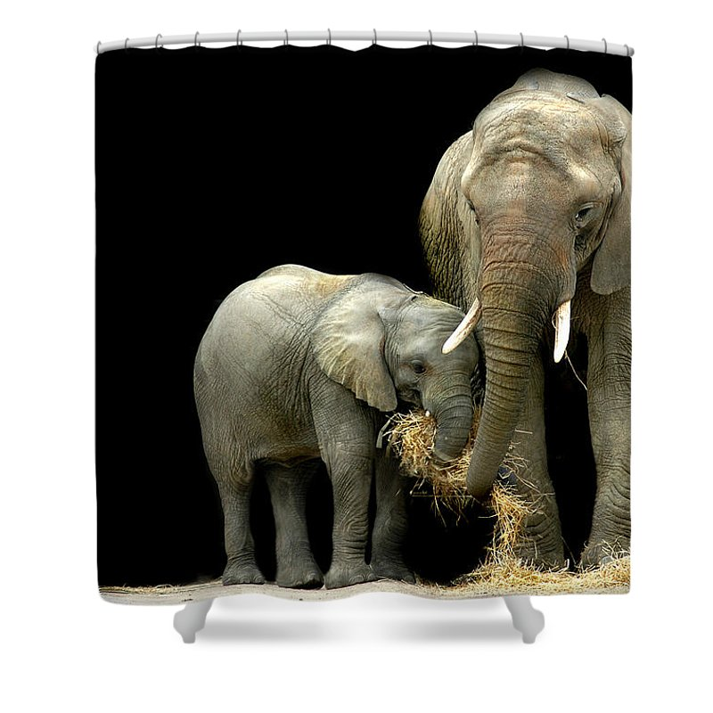 Elephant Shower Curtain featuring the photograph Feeding Time by Stephie Butler
