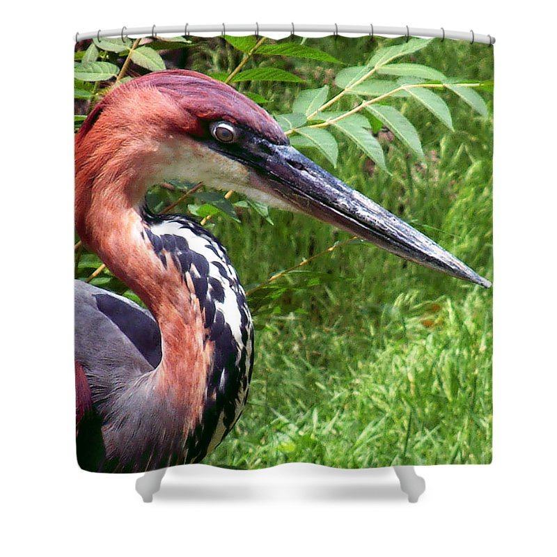 Bird Shower Curtain featuring the photograph Feeling A Bit Peckish by RC DeWinter