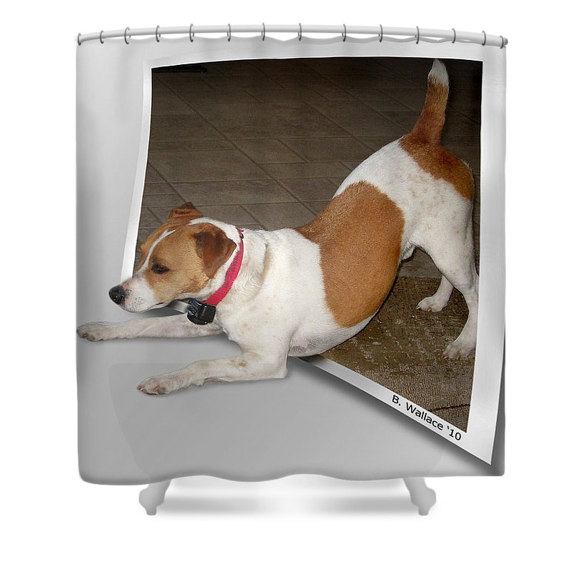 2d Shower Curtain featuring the photograph Feeling Frisky by Brian Wallace