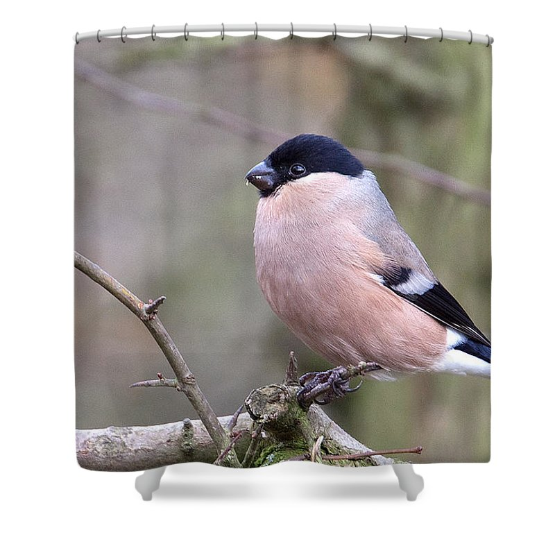 Bullfinch Shower Curtain featuring the photograph Female Bullfinch by Bob Kemp