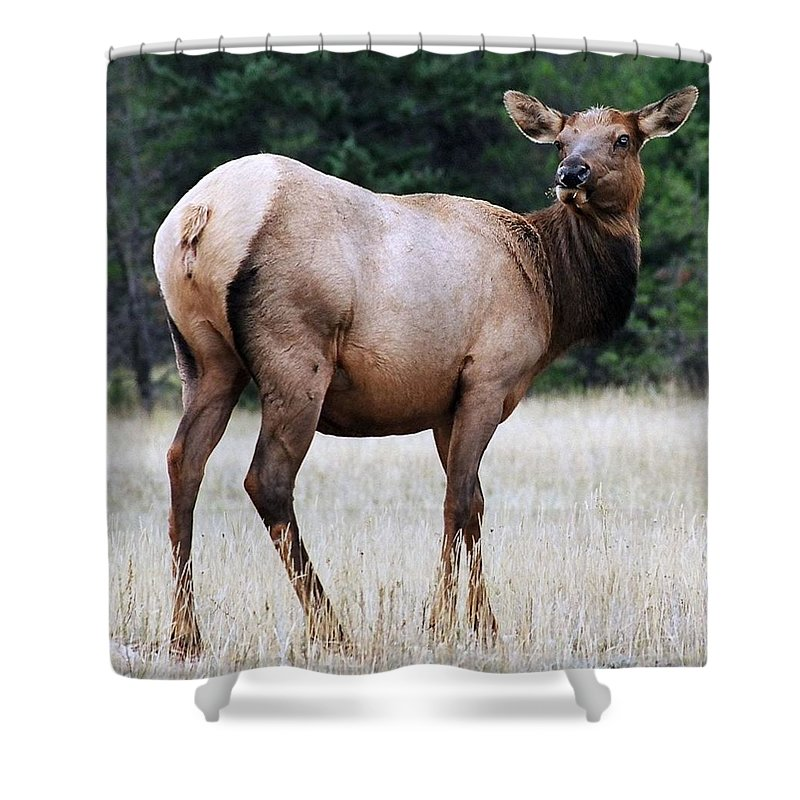 Elk Shower Curtain featuring the photograph Feme Elk by Tiffany Vest