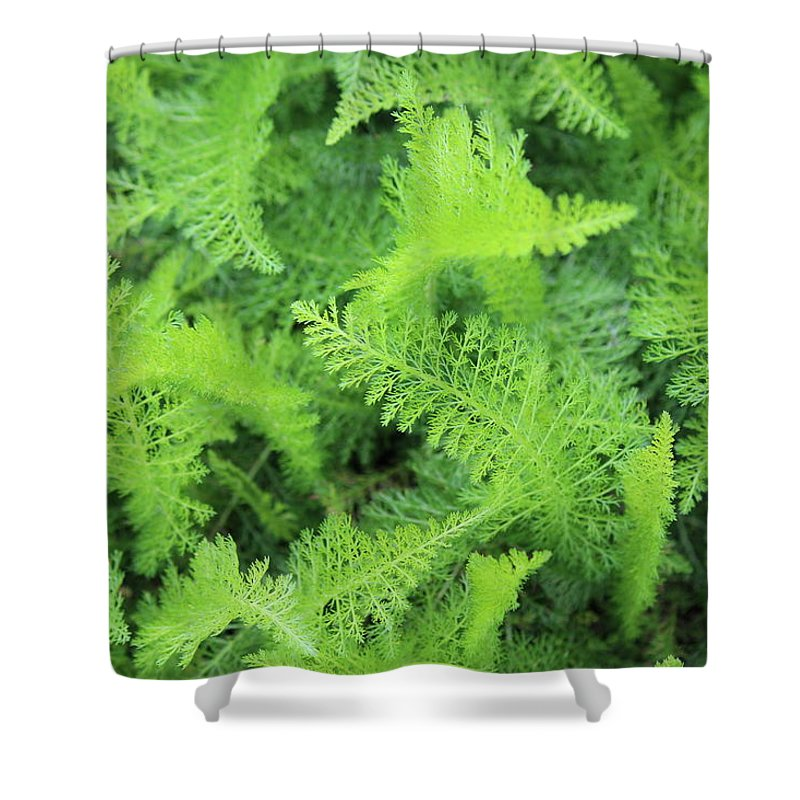 Fern Shower Curtain featuring the photograph Fern by Beth Vincent