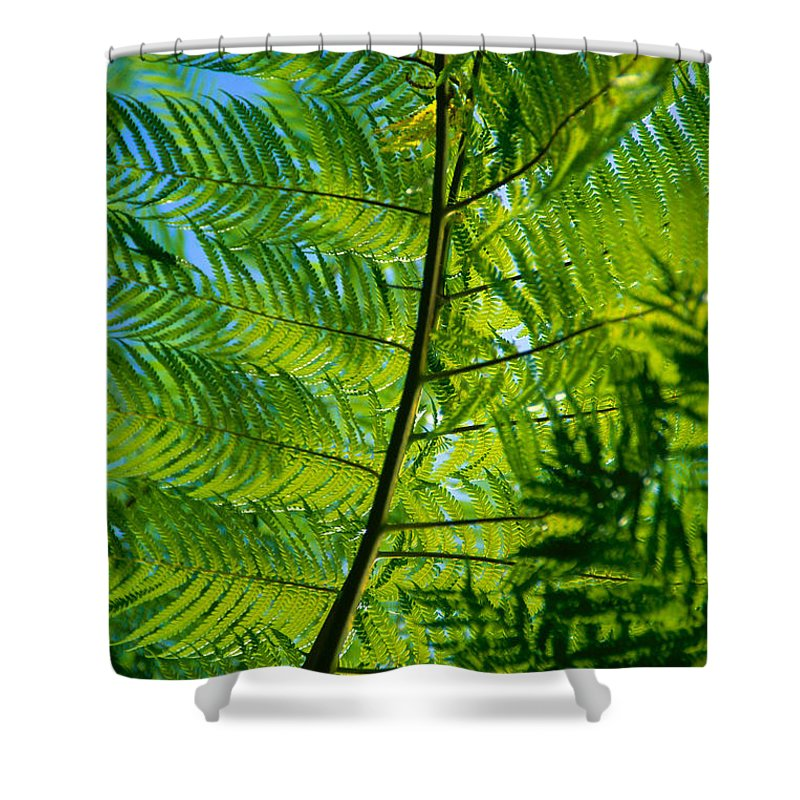 Afternoon Shower Curtain featuring the photograph Fern Detail by Himani - Printscapes