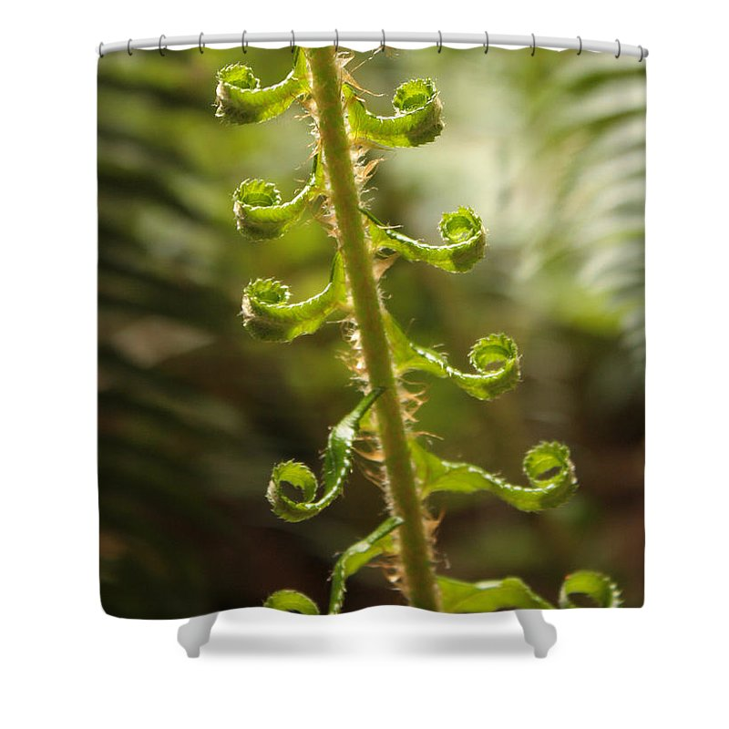 Fern Frond Shower Curtain featuring the photograph Fern Frond by Carol Groenen