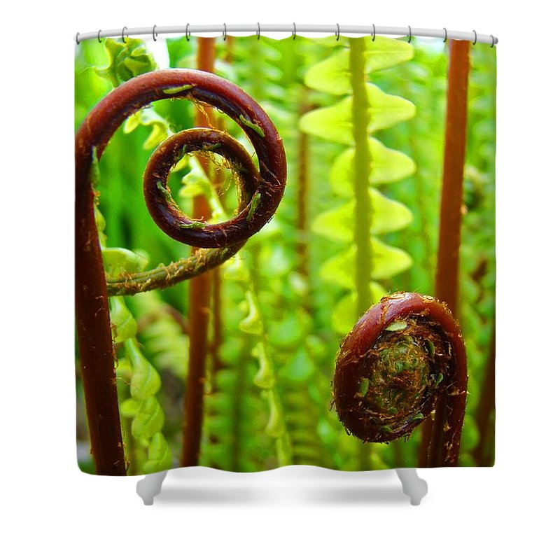 Fern Shower Curtain featuring the photograph Fern Fronds Fine Art Photography Forest Ferns Green Baslee Troutman by Baslee Troutman