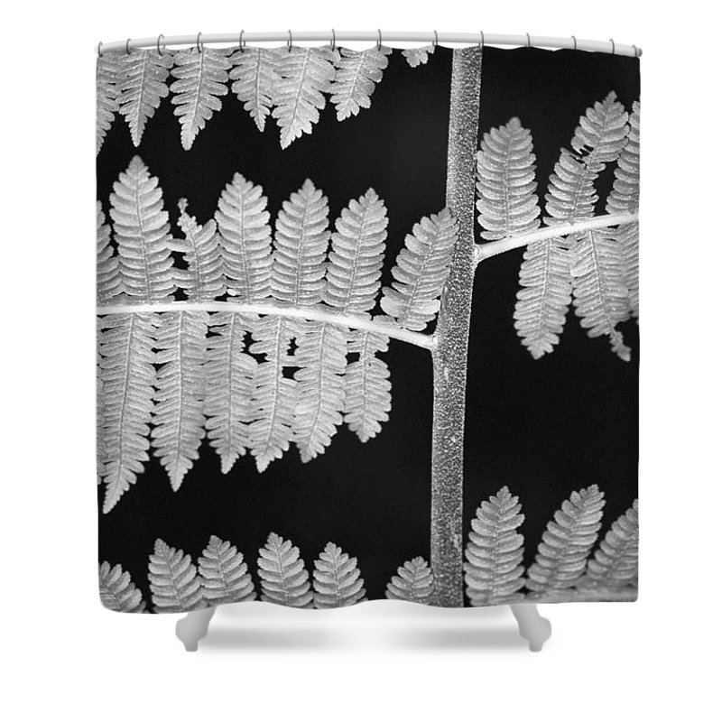 Fern Leaves Shower Curtain featuring the photograph Fern Leaves 1 by Donna Corless