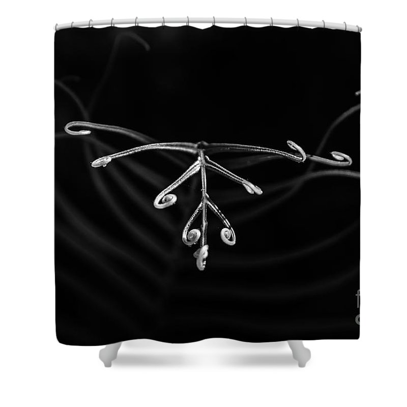 Michelle Meenawong Shower Curtain featuring the photograph Fern by Michelle Meenawong