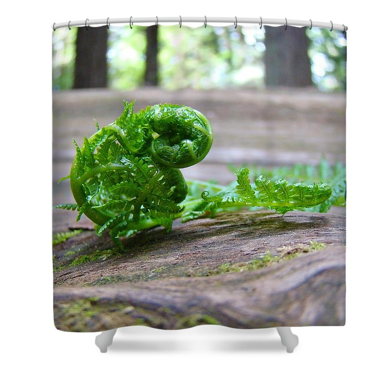 Fern Shower Curtain featuring the photograph Fern On Big Redwood Tree Art Prints Baslee Troutman by Baslee Troutman
