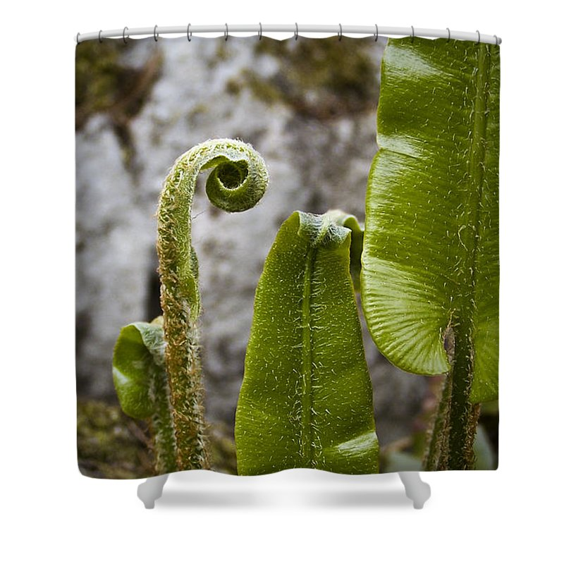 Irish Shower Curtain featuring the photograph Fern Study At Blarney Castle Ireland by Teresa Mucha