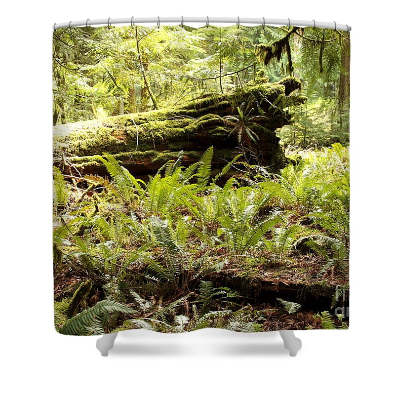 Ferns Shower Curtain featuring the photograph Fern Valley by Carol Groenen