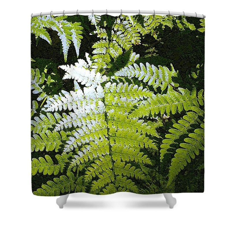 Ferns Shower Curtain featuring the photograph Ferns by Nelson Strong