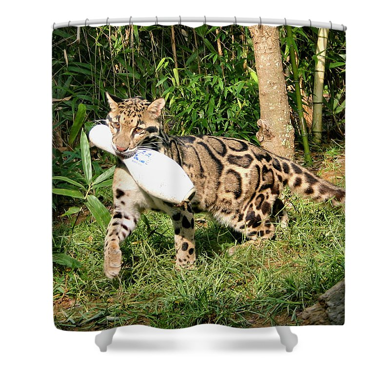 Clouded Leopard Shower Curtain featuring the photograph Fetch by Kristin Elmquist