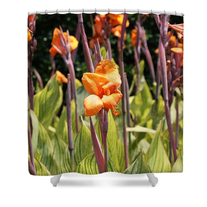 Floral Shower Curtain featuring the photograph Field For Iris by Shelley Jones
