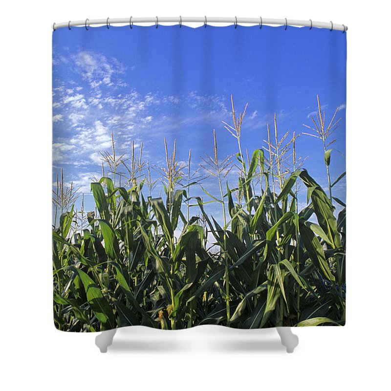 Corn Shower Curtain featuring the photograph Field Of Corn Against A Clear Blue Sky by Kenneth Garrett