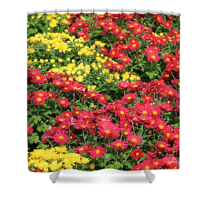 Red And Yellow Flowers Shower Curtain featuring the photograph Field Of Red And Yellow Flowers by Carol Groenen