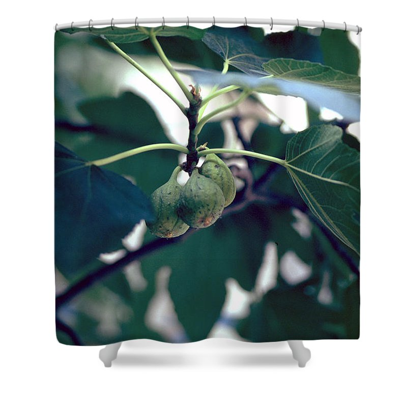 Fig Shower Curtain featuring the photograph Fig by Flavia Westerwelle