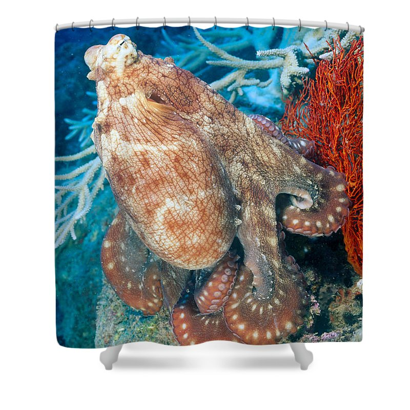 Animal Art Shower Curtain featuring the photograph Fiji, Day Octopus by Dave Fleetham - Printscapes