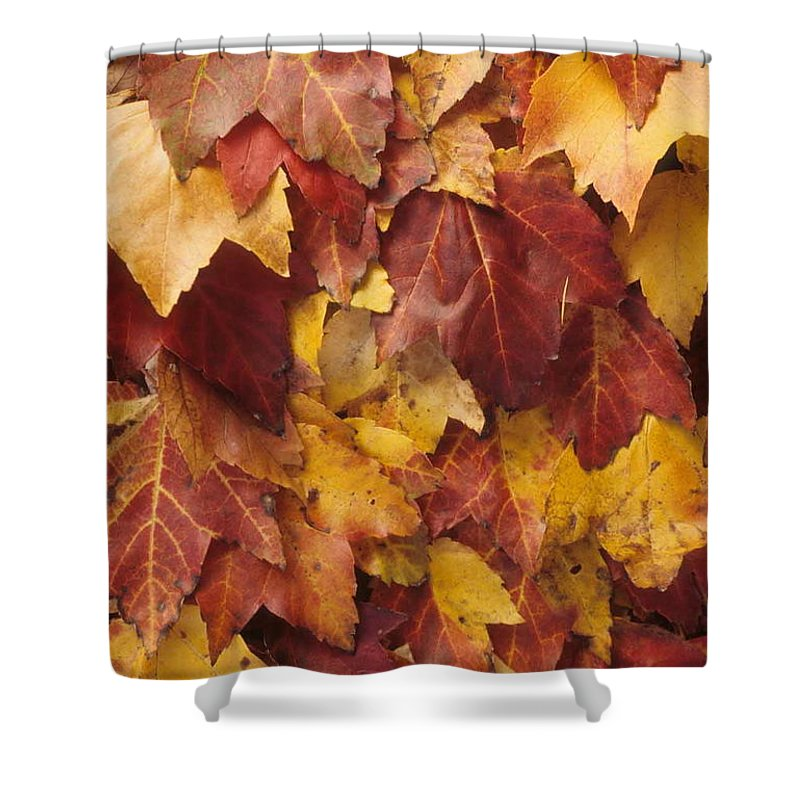 Fall Shower Curtain featuring the photograph Final Fall In File by Laurie Paci