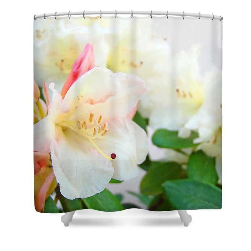 Rhodie Shower Curtain featuring the photograph Fine Art Florals Prints White Pink Rhodies Rhododendrons Baslee Troutman by Baslee Troutman