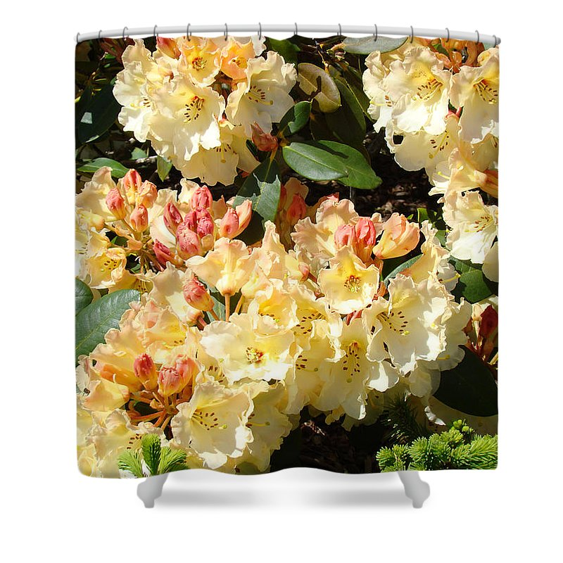 Rhodie Shower Curtain featuring the photograph Fine Art Prints Rhodies Floral Canvas Yellow Rhododendrons Baslee Troutman by Baslee Troutman
