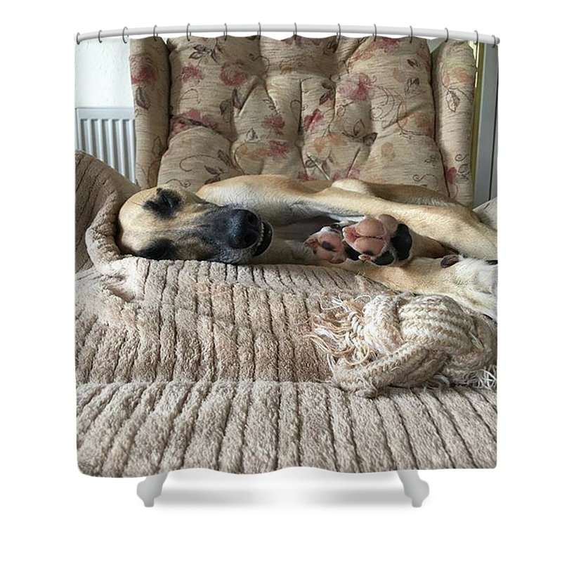 Lurcher Shower Curtains