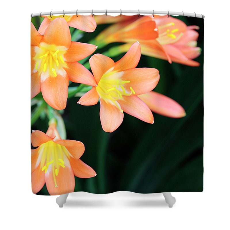 Clivia Shower Curtain featuring the photograph Fire Lily 2 by Neil Overy