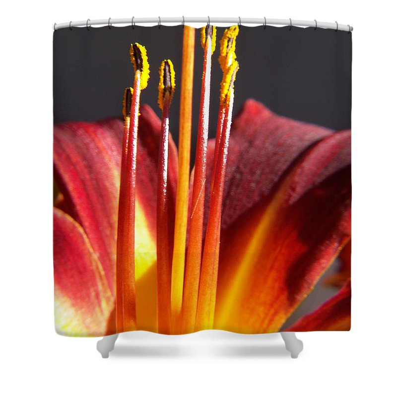 Fire Lily Shower Curtain featuring the photograph Fire Lily by Amy Fose
