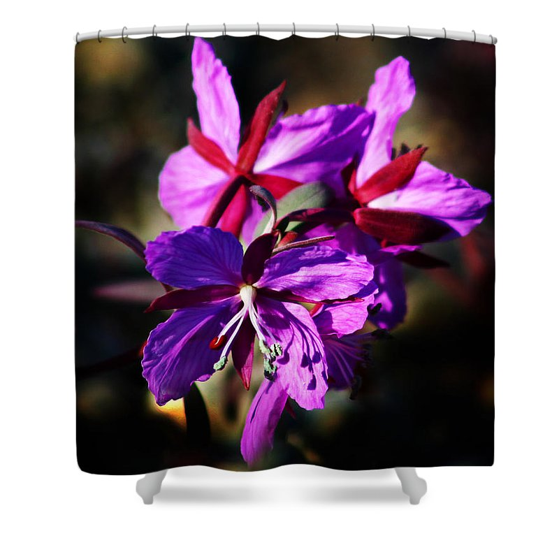 Fireweed Shower Curtain featuring the photograph Fireweed by Anthony Jones