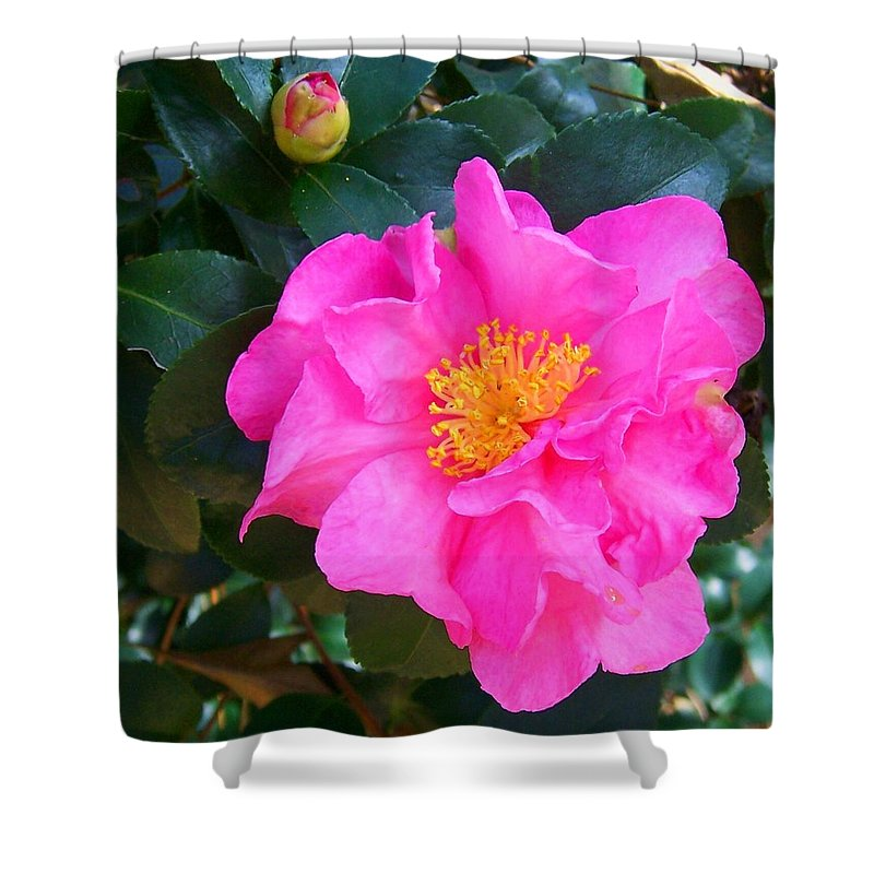 Camelia Shower Curtain featuring the photograph Firey Pink Camelia by Laurie Paci