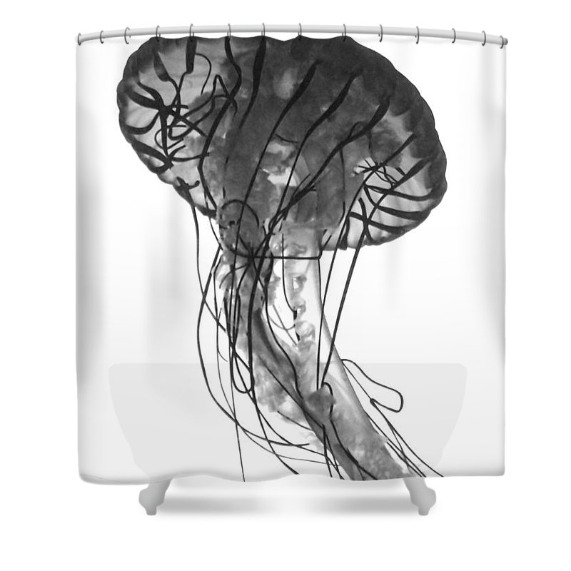 Jellyfish Shower Curtain featuring the photograph Fish 27 by Ben Yassa