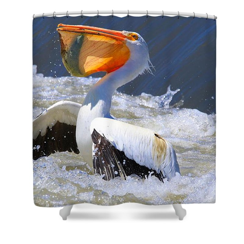 Fish For Dinner Shower Curtain featuring the photograph Fish For Dinner by Lynn Hopwood