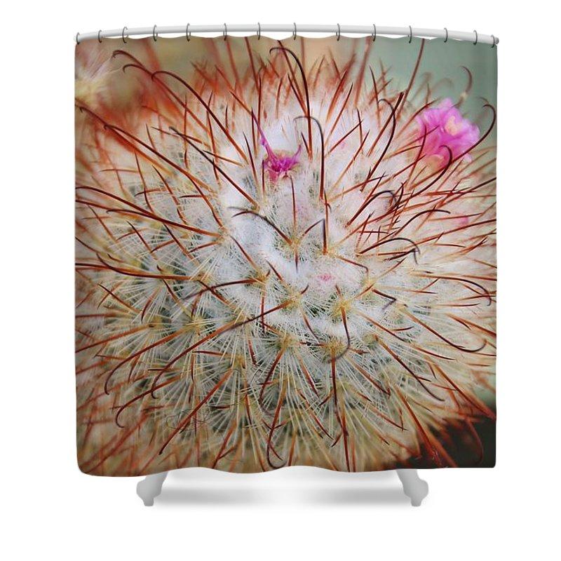 Flower Shower Curtain featuring the photograph Fish Hook Barrel Cactus by Karen Silvestri