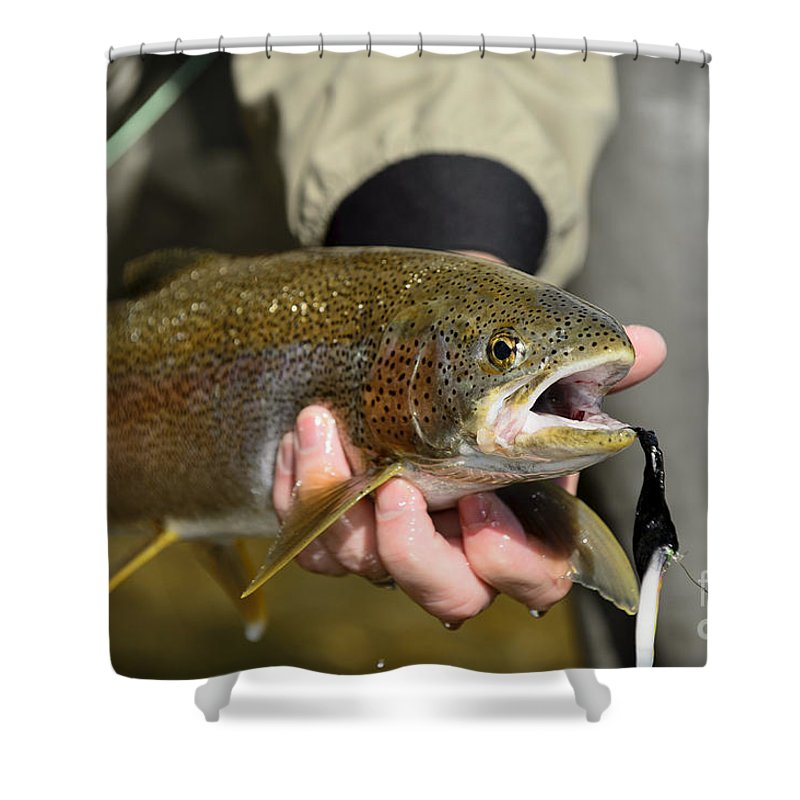 Rainbow Shower Curtain featuring the photograph Fish In Hand by Chip Laughton
