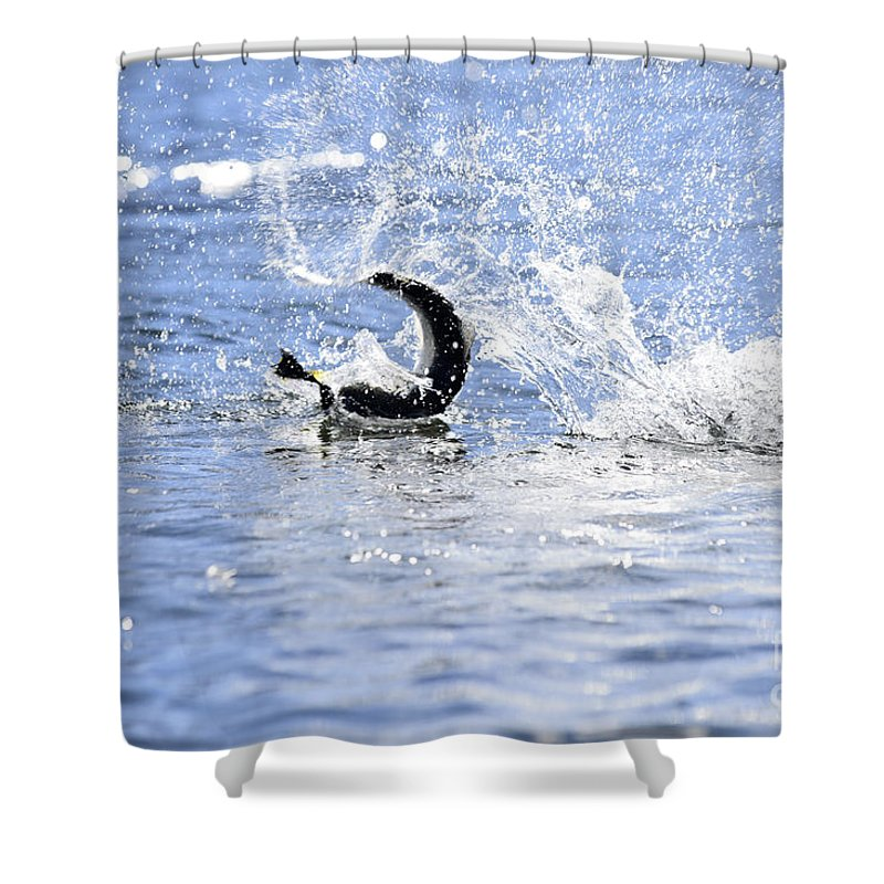 Rainbow Shower Curtain featuring the photograph Fish On by Chip Laughton