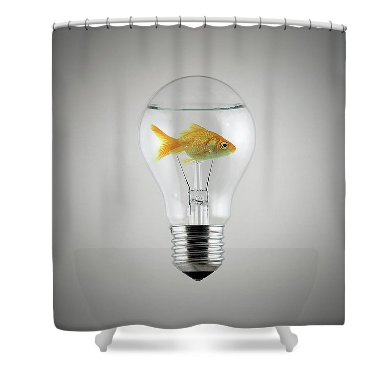 Designs Similar to Fish by Zoltan Toth