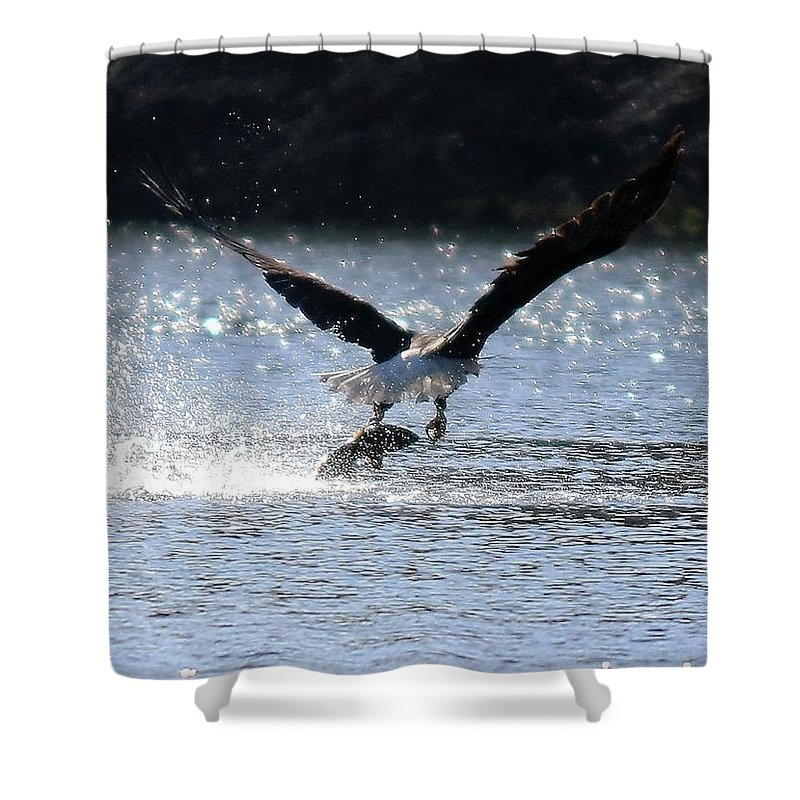 Eagle Shower Curtain featuring the photograph Fishing by Lisa Spero