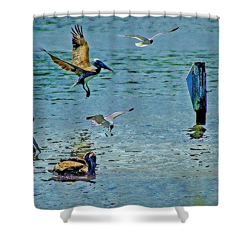 Birds Shower Curtain featuring the painting Fishing Pelican And Seagulls by Michael Thomas