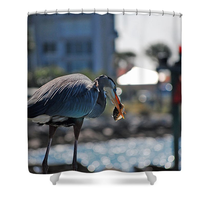 Gray Heron Shower Curtain featuring the photograph Fishing by Robert Meanor
