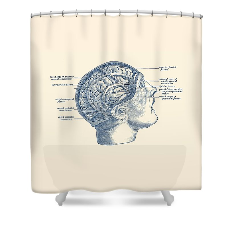 Brain Shower Curtain Featuring The Drawing Fissure Focused Diagram