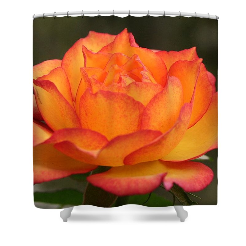 Rose Shower Curtain featuring the photograph Flame by Matthew Wilson