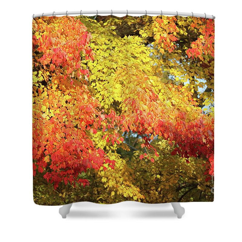 Reid Callaway Autumn Leaves Shower Curtain featuring the photograph Flaming Autumn Leaves Art by Reid Callaway